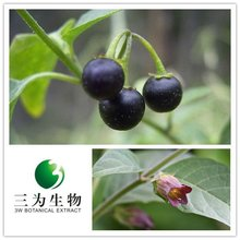 Natural fine powder Belladonna Extract from 3W Botanical Manufacturer