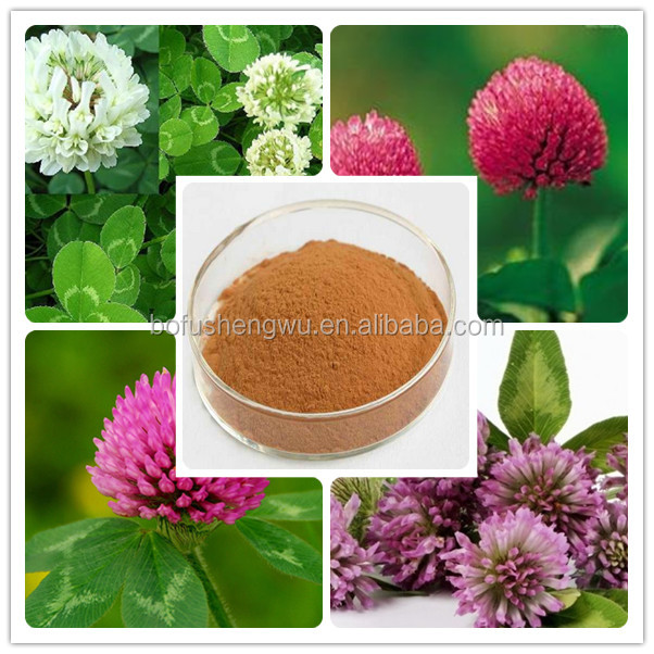 natural red clover extract isoflavones/nature red clover plant extract/red clover powder extracts