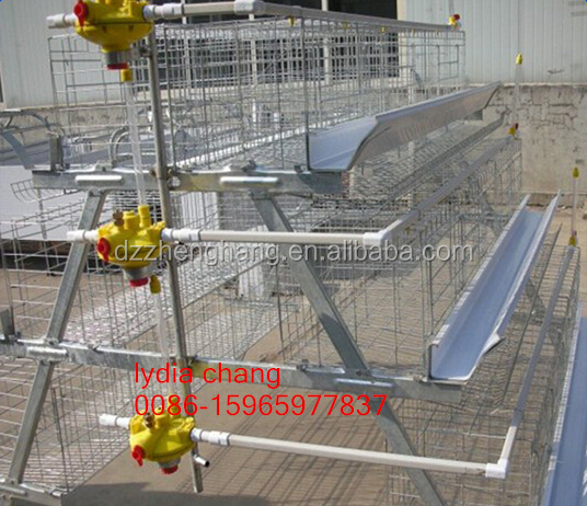 chicken cage/quail cage with high quality/poultry cage hot sale in africa (lydia : 008615965977837)