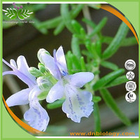 supply low price nature Rosemary leaf Extract, Carnosic acid with Elimination of stomach bloating, enhance memory