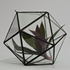 /product-detail/micro-landscape-glasshouse-clear-glass-globe-hanging-terrarium-60383731320.html