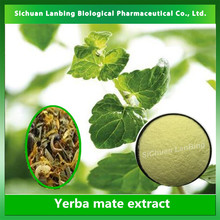 Chinese herb suppliers supply organic herb tea extract yerba mate extract