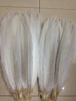 wholesale Silver Pheasant Feather
