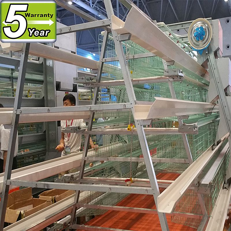design chicken layer cages with good price/poultry eqipment