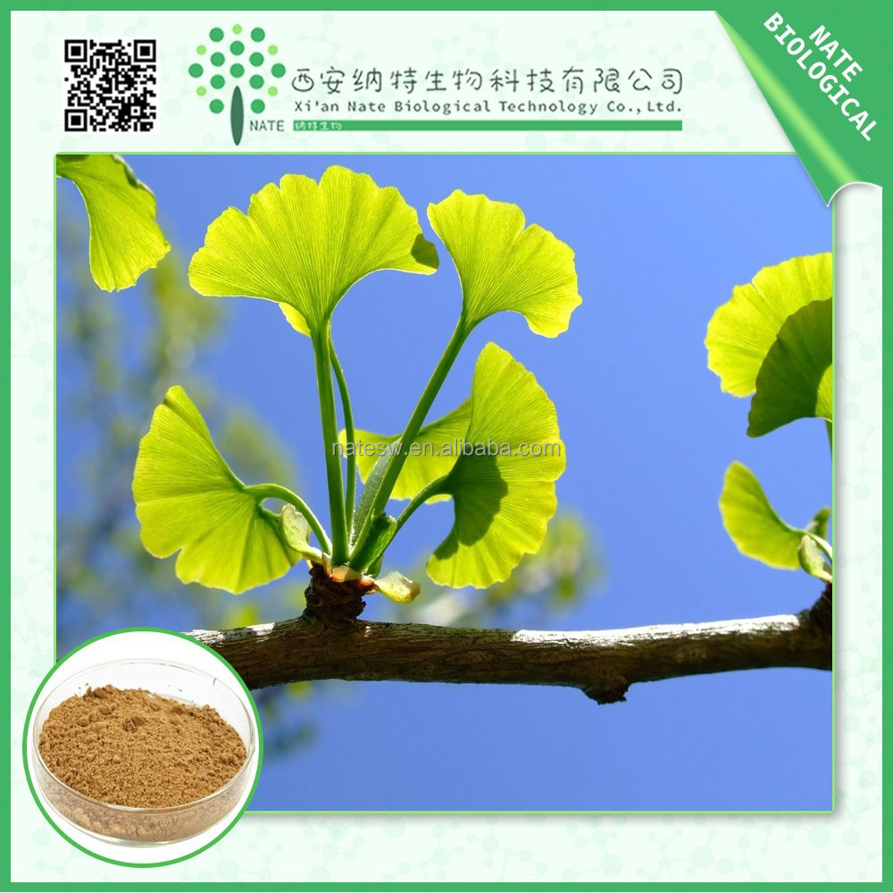 HOT sale ginkgo biloba extract powder Flavone Glycosides / Lactones 24/6 best price