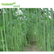 Long green cowpea Asparagus vegetable long yard bean seeds