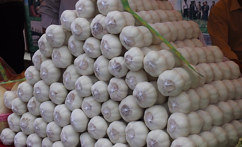 Common type cultivation normal white garlic fresh garlic
