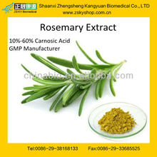 GMP Factory Supply Top Quality Rosemary Extract Rosmarinic Acid