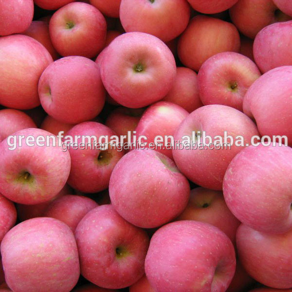 china fuji apples fruit importers wholesale prices apple fruit