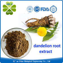 High Quality Pure organic Dandelion Root Extract wholesale