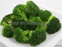 deep iqf frozen broccoli cut cuts vegetable in 10kg carton exporter supplier China