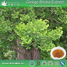 Food Grade Herbal Ginkgo Biloba Leaf Extract