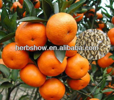 New Mandarin Orange Seeds For Planting