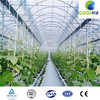 Professional Top Quality Industrial Film Greenhouse