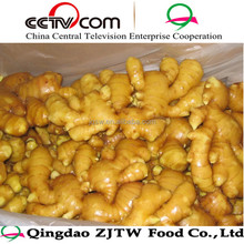 bulk fresh ginger 2014 new crop ginger