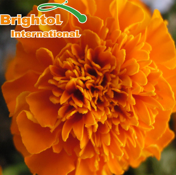 Best Quality Marigold Extract Lutein