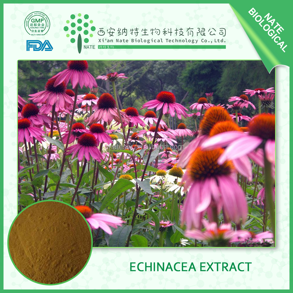hot sell china suppliers Choric acid Echinacea Purpurea Extract 2% by HPLC