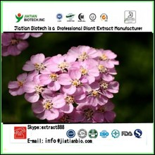 Factory supply Yarrow Flower Extract