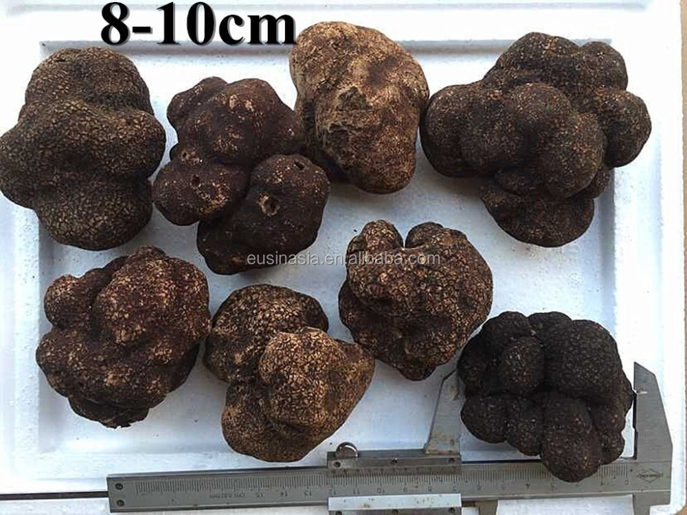 top maturity bigger size truffle