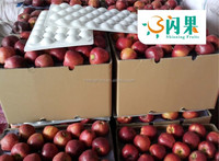 2015 fresh Organic huaniu apple(china.shaanxi)
