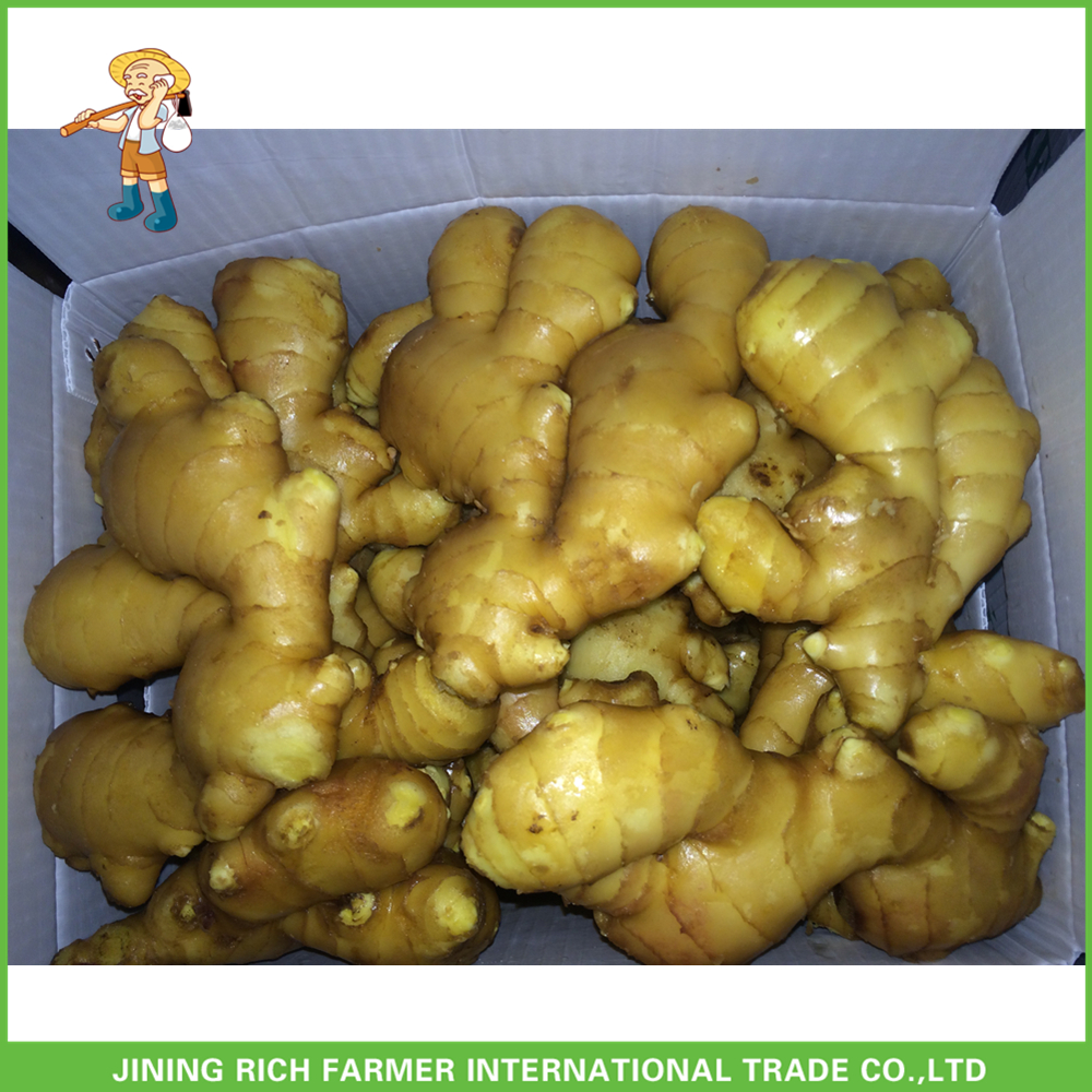 Bulk New Crop Price Of Fresh Ginger In China