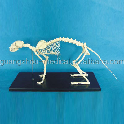 MC-RMS006 Cat skeleton model w/plastic stand
