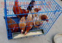 folding chicken coop cages