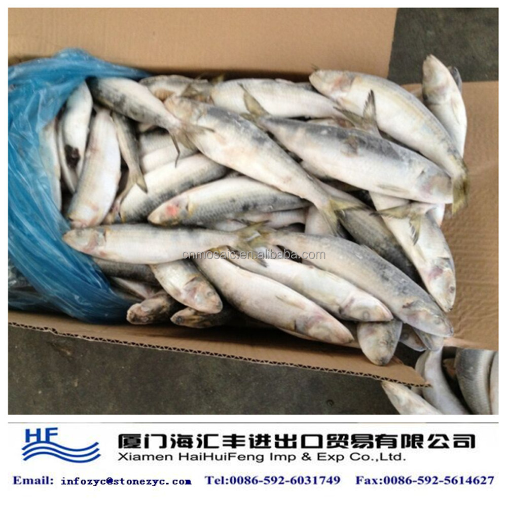 frozen fresh whole sardine on sale