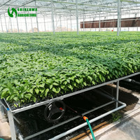 Nursery Equipment Planting Table Greenhouse For