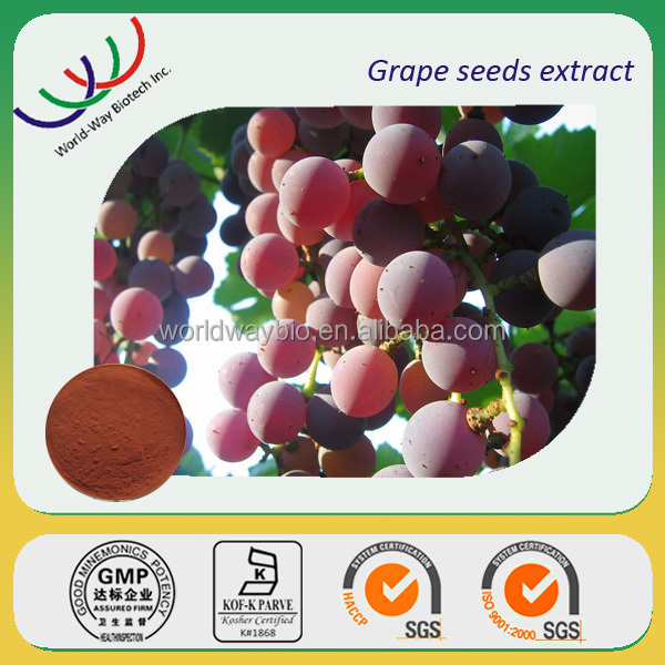 free sample ! China 16 years herbal manufacturer GMP ,KOSHER ,ISO natural grapevine P.E. resveratrol