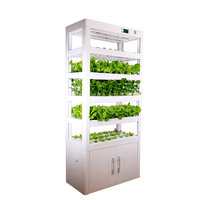LED Grow Light Farming Hydroponic Growing Greenhouse System For Leafy Vegetable