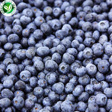 Wholesale IQF Best Common Frozen Blueberries