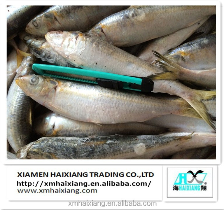 10 kg per pcs bulk seafood frozen fresh sardine for sale