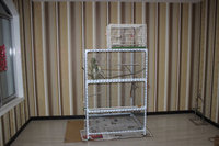 hot sale pet parrot bird cage