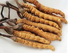 Factory Offer Price Cordyceps