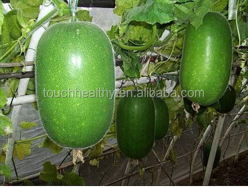 Stock quality chinese vegetable seed/ white gourd seeds THS430 WITT 250 gram seeds/Bag