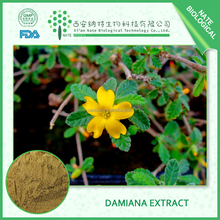 Medicine for Long Time Sex Pure Natural Pure Damiana Leaf Extract 20:1 50:1