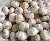 China Fresh Garlic Naturally Grown and can be used for seed Garlic