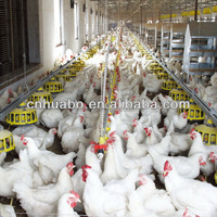 Huabo chicken feeding system of poultry equipment
