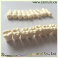 Exquisite workmanship dental model Permanent teeth with straight root