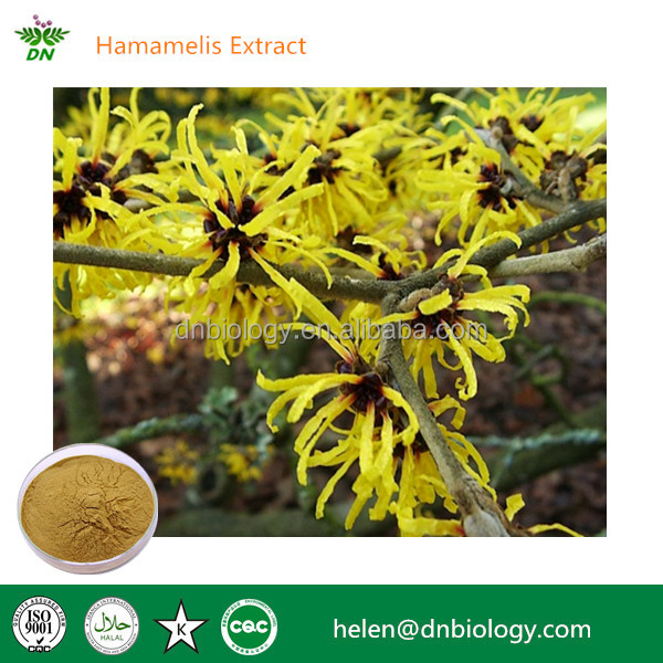 Natural Pure herbal medicine extract hamamelis extract
