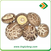 wholesale China Frozen 4.5-5 cm Shiitake Mushroom with high quality