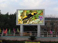 Cheap price full color p4.81 outdoor sxey xxx video led display screen