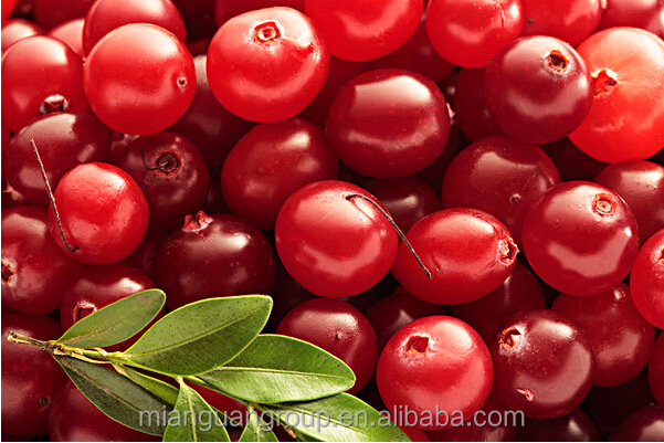 Cranberry fruit (Vaccinium Macrocarpon) extract powder 25% Proanthocyanidins