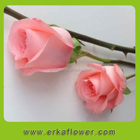 Beauty good smell export fresh cut flowers roses from Kunming planting base