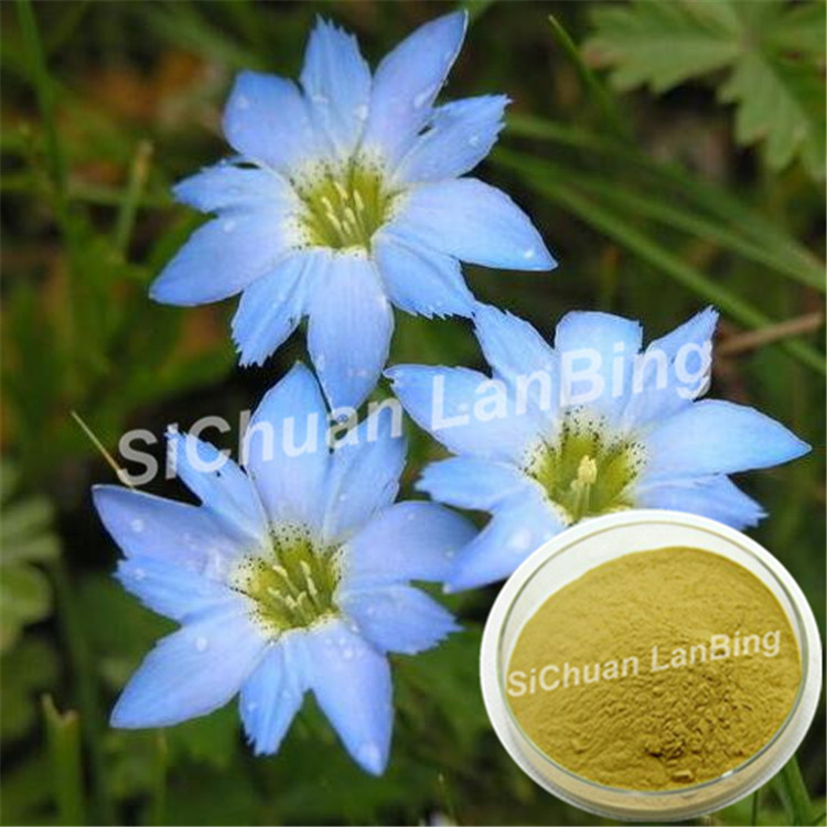 Factory price organic Gentiana lutea in herbal extract