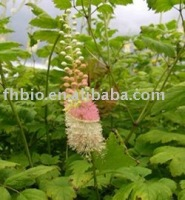 Black Cohosh P.E / Pharmaceutical Raw Materials