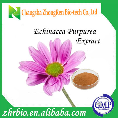 GMP standard for Echinacea Purpurea Extract 1%-10% polyphenol 4% chicoric acid