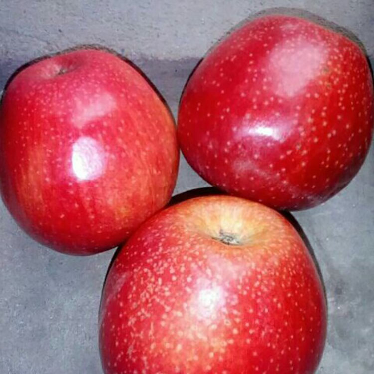 Top Quality New Crop Organic Red Delicious Apple