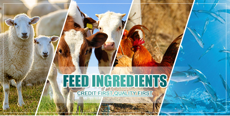 Poultry Feed Corn Gluten Meal Corn Protein Powder  Corn Gluten Meal